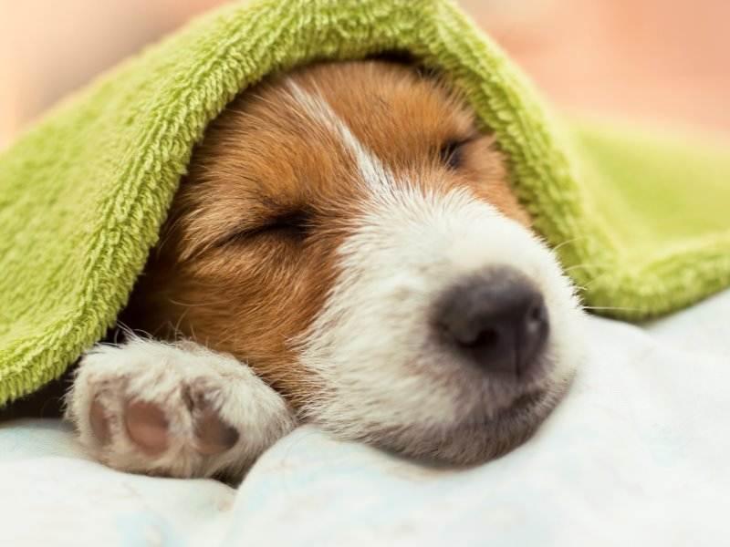 眠ってばかりになったら注意が必要