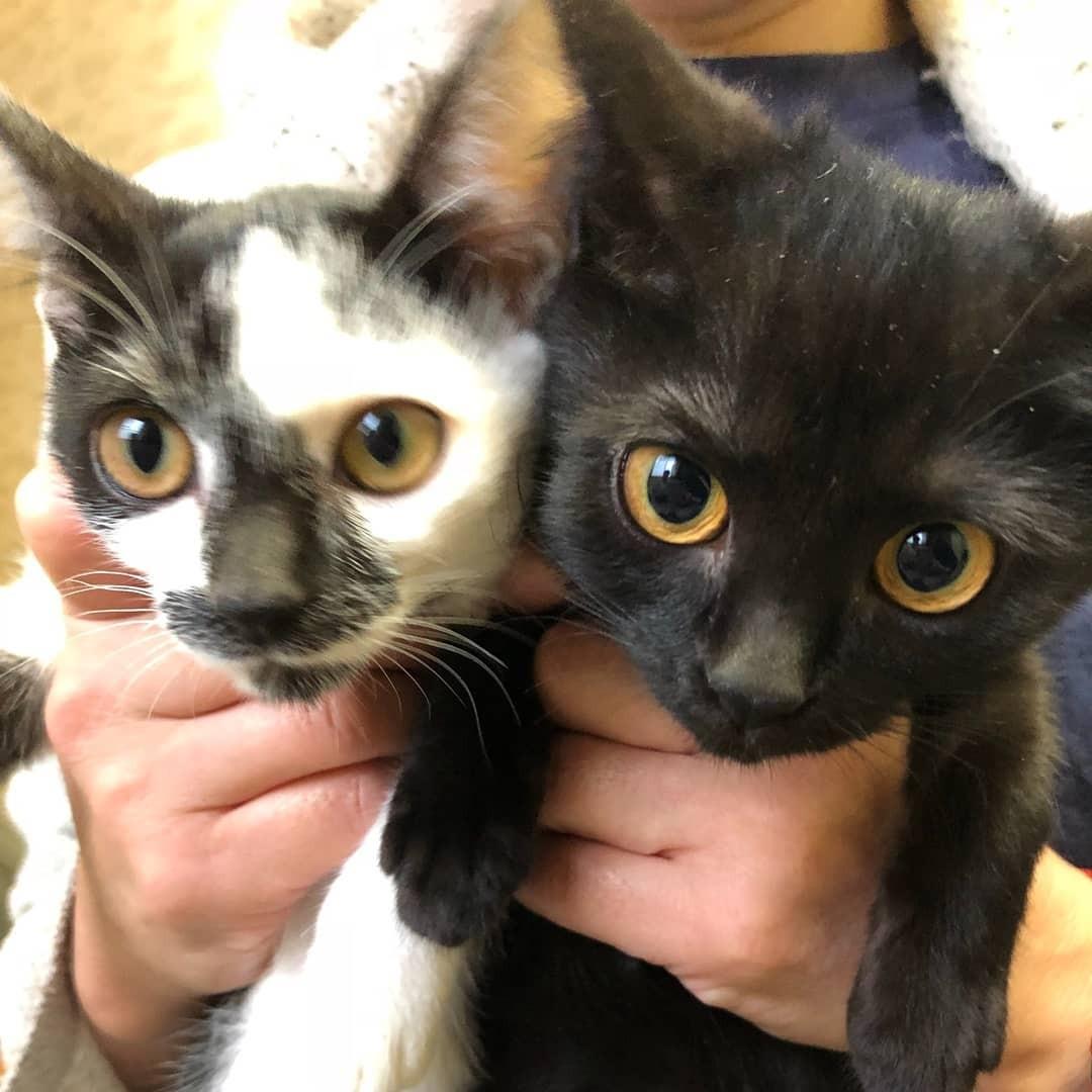 子猫 サビ 猫