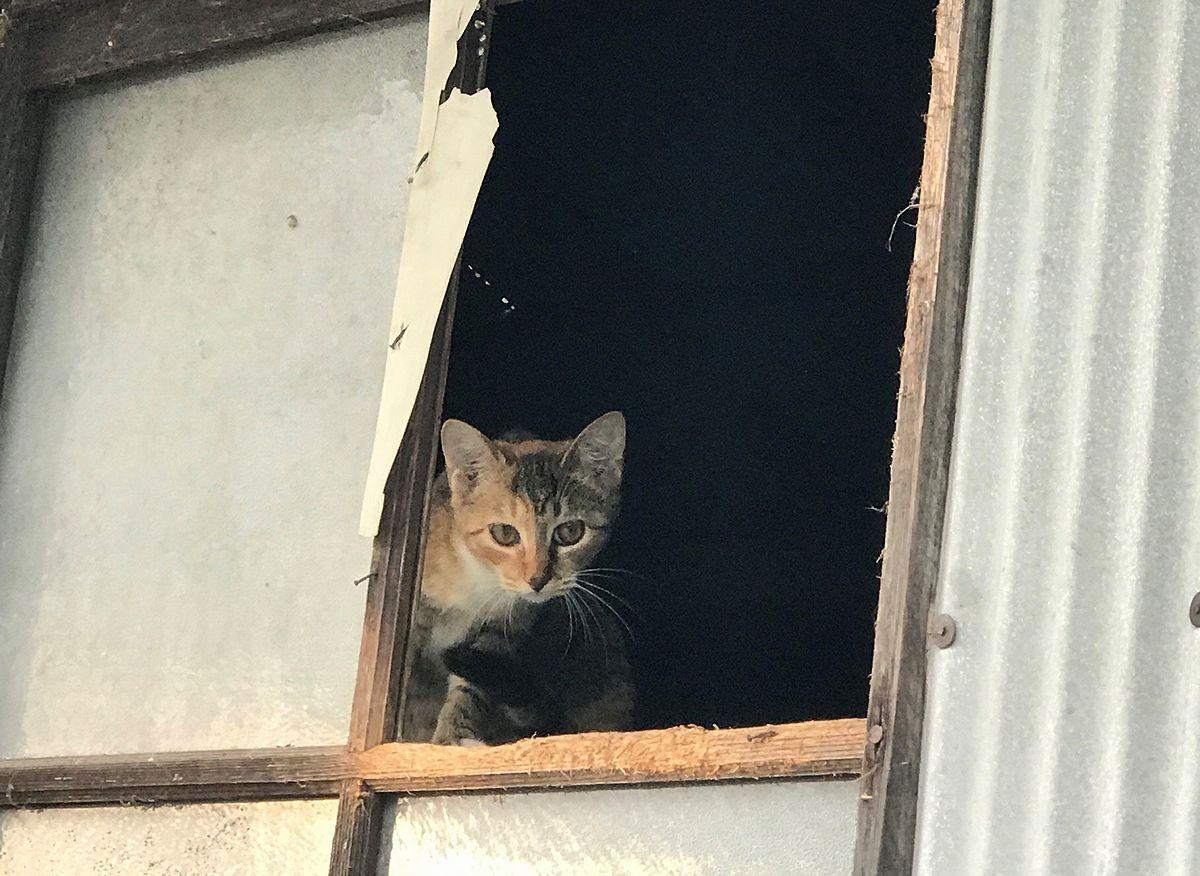 餓死、轢死、凍死…山間部の廃屋に遺棄された数十匹の猫を救え! アニマルレスキューが見た凄惨な現場