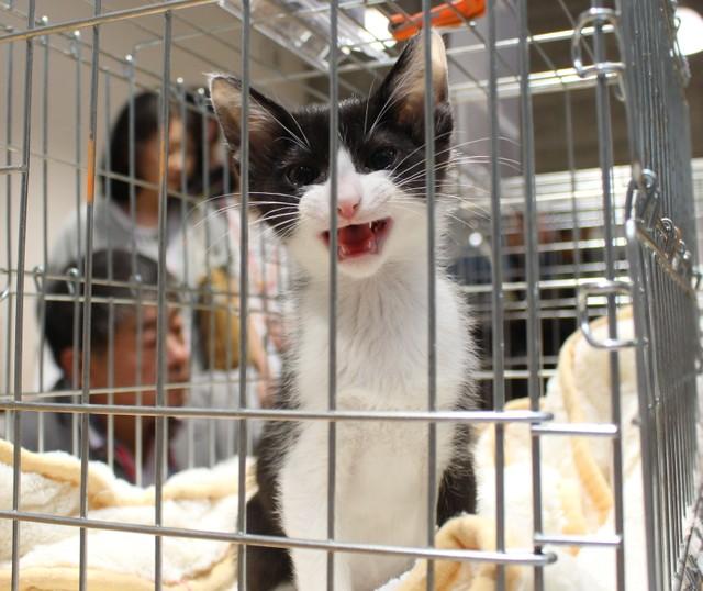 条件 引き取り 保健所 猫 ペットの里親・飼い主になるための条件