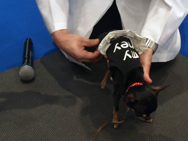 犬の関節疾患では、小型犬の膝蓋骨トラブルも非常に多い