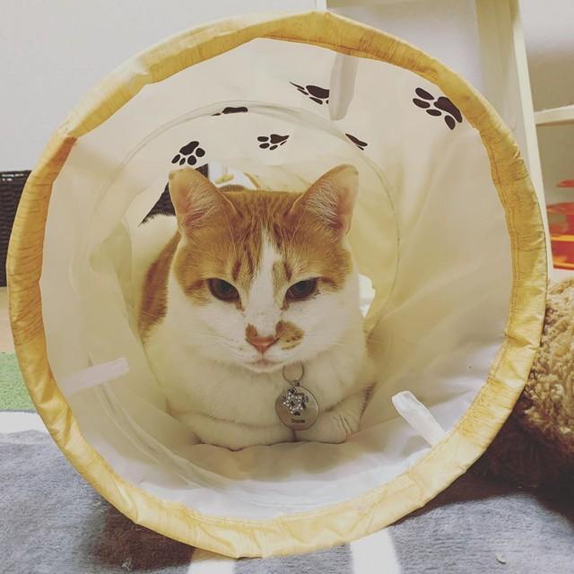 猫 新入り 猫 先住