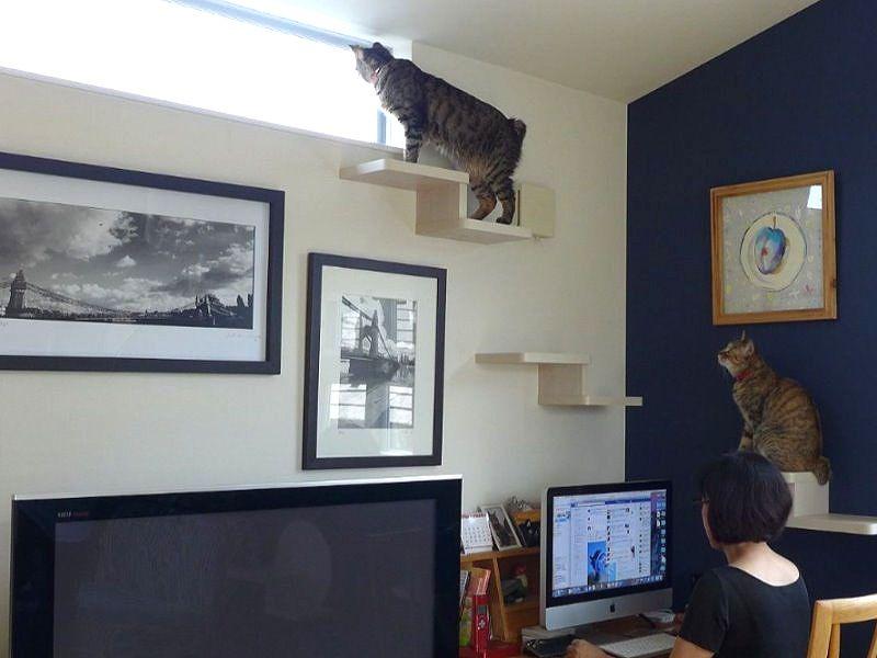 猫の居場所を作ってあげると邪魔されない