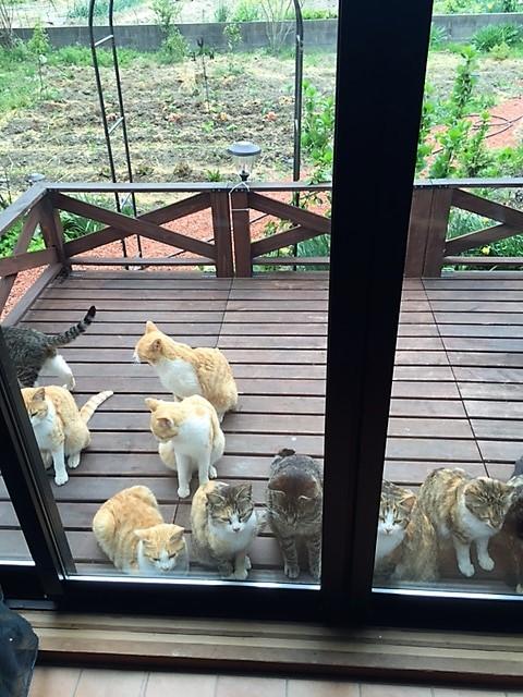 地域猫が集まってくる里山カフェ「そらいろのたね」