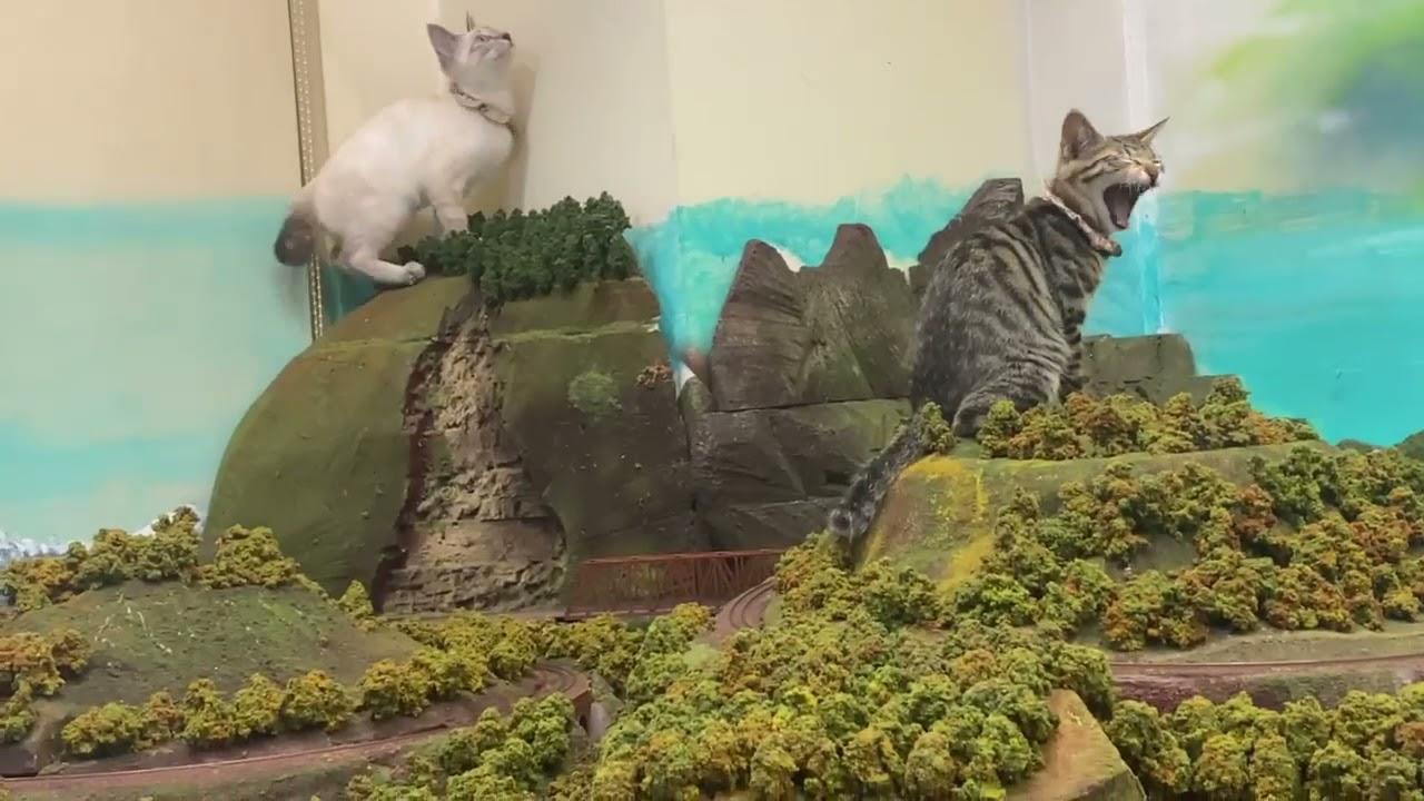 """小さな世界の平穏を脅かす、あらたな""""巨大猫""""が出現か? 話題のジオラマ食堂に「家族」が増えました"""